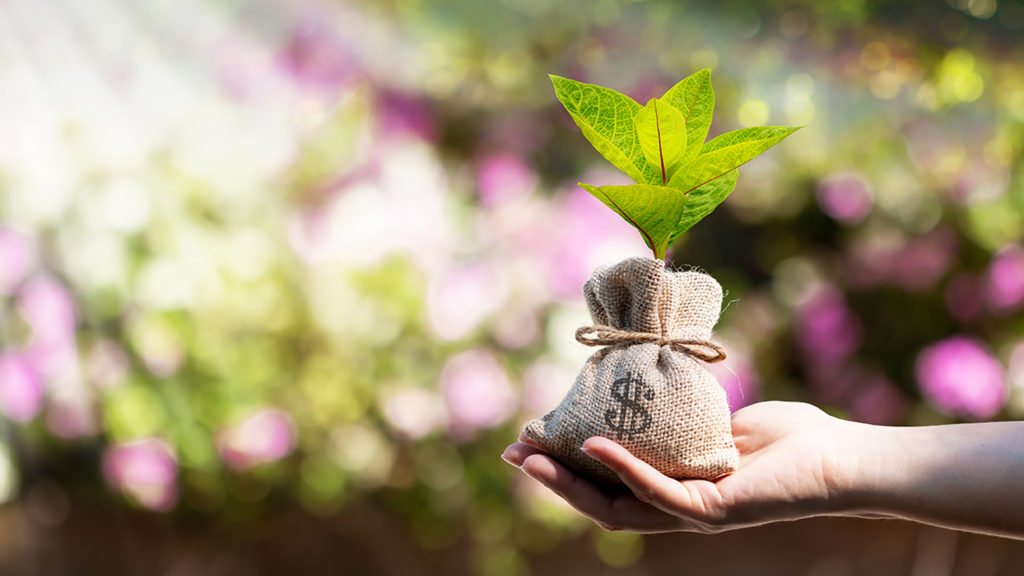 hand holding bag of money with plant in it